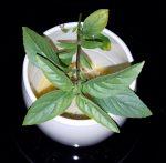 EggTastic w/Fresh Herbs